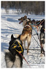 Natalia Robba Photography = Kiruna Dogsledding