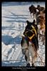 Natalia Robba Photography = Kiruna Dogsleddin