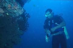 Diving, Fiji (sam)