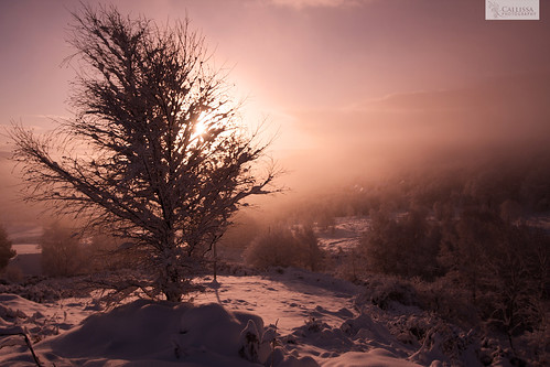 pink orange snow tree silhouette sunrise pontypridd graig trefforest callissacaffull
