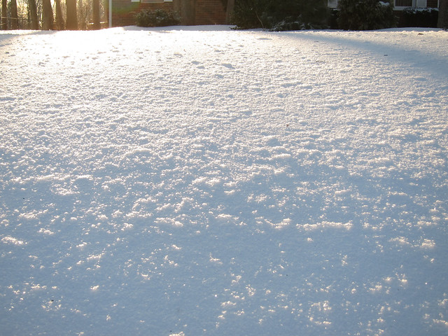 The frozen yard
