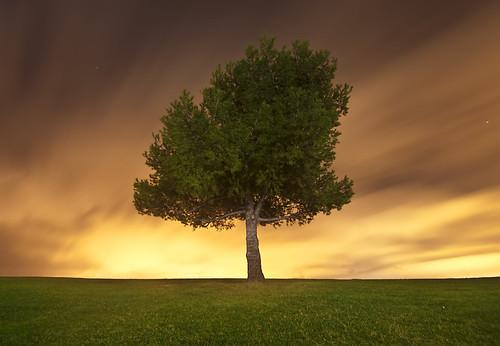 california tree beach pier los long exposure pentax angeles socal lone tamron 1024 k20d