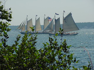 Schooners off Spruce Point