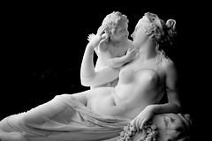 Cupid's Beauty