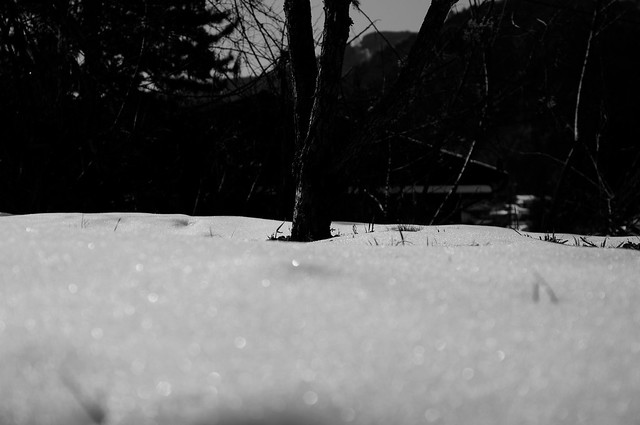 Photo:snow By