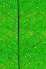 Green Leaf iPhone Background