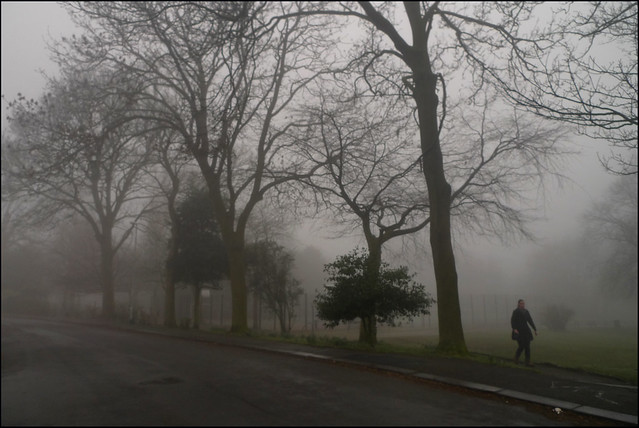 Park in the mist