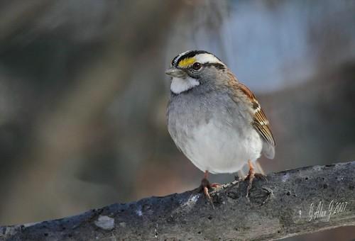 ny newyork birds canon 7d upstatenewyork capitaldistrict albanycountyny mygearandme 100x400mmusml
