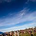 Kite Fest 2011-0007.jpg