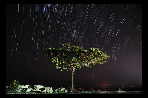 tree beach beautiful landscape photography star nightscape malaysia taman johor lonelytree nigh startrail pontian tamanrekreasisungairambah sungairambahrekreasi kualasungairambah
