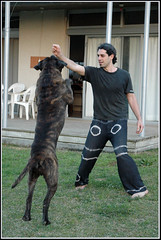 Training a Bullmastiff & Me - בול מאסטיף ואני