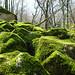 Green Cliff (صخره سبز)
