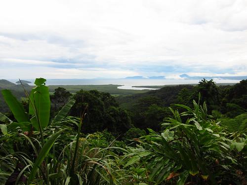 widok z jednego ze wzgórz w parku narodowym Daintree