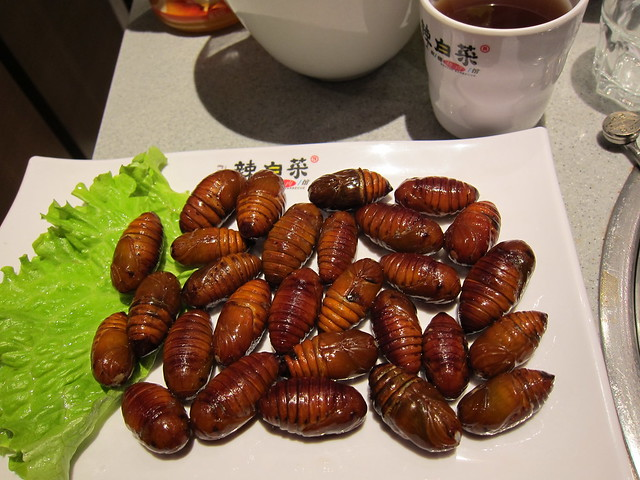 Cicada Cocoons Flickr Photo Sharing