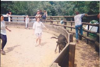 Capture du veau par les filles