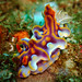 MAGNIFICENT CERATOSOMA by billunder