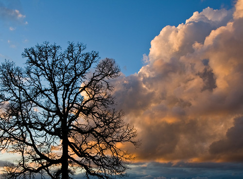 winter sunset sky clouds oaktree