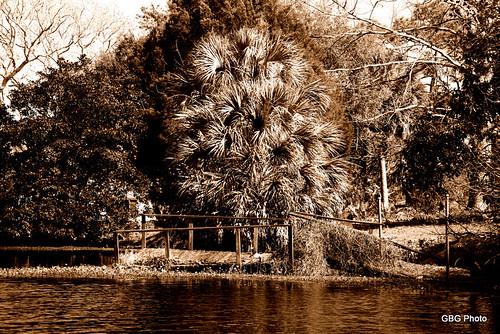 new lake sepia port outdoors nikon florida cedar fl richey d90