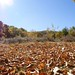 Autumn in Spain (Ed Drewitt)