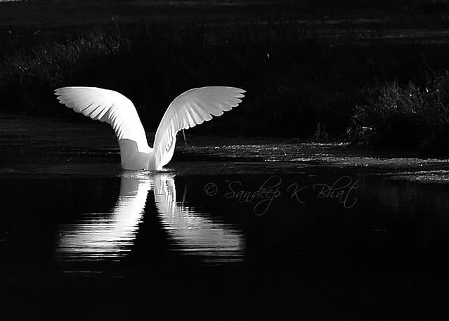 Stork Fairy