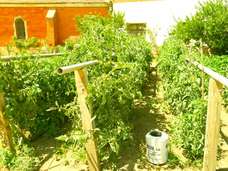 jardineros en acci n cultivar un huerto ecol gico