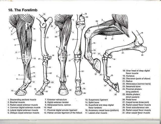 The Forelimb Flickr Photo Sharing!