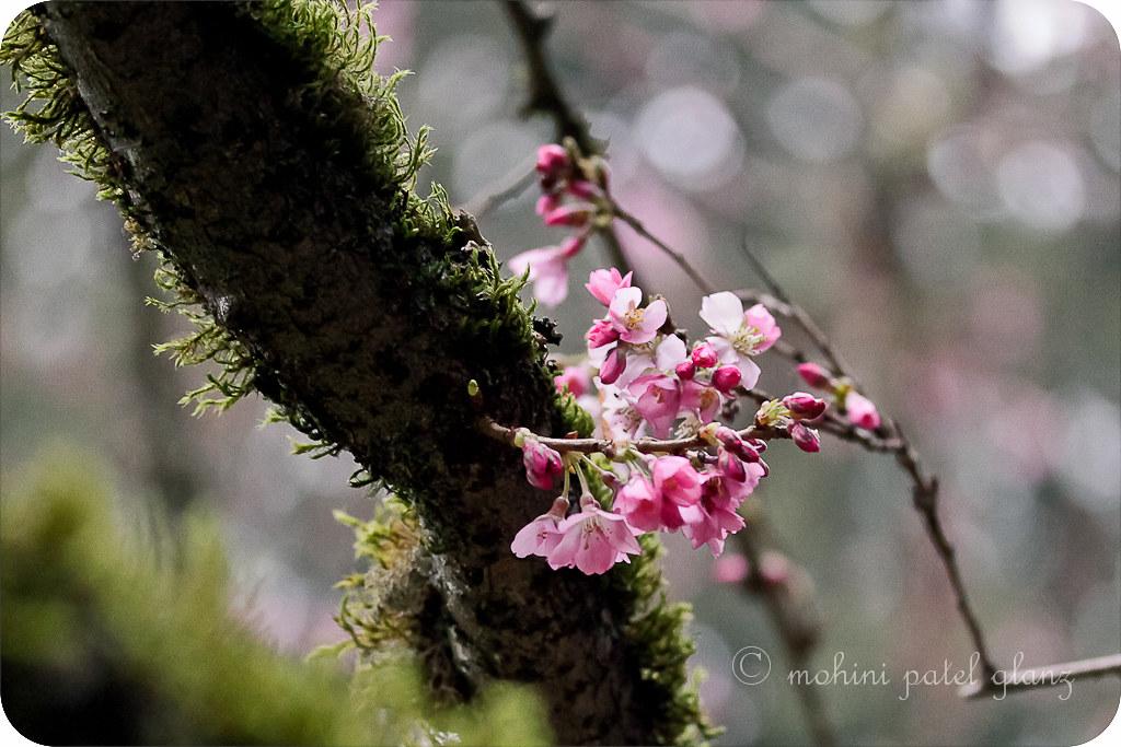 arboretum blossoms #4