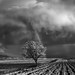 One Almond Tree Under the Storm