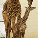 baby giraffe and mom Tessa