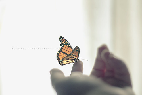 The butterfly effect~