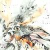 hare24web