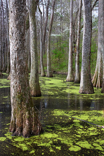 Spring At The Swamp
