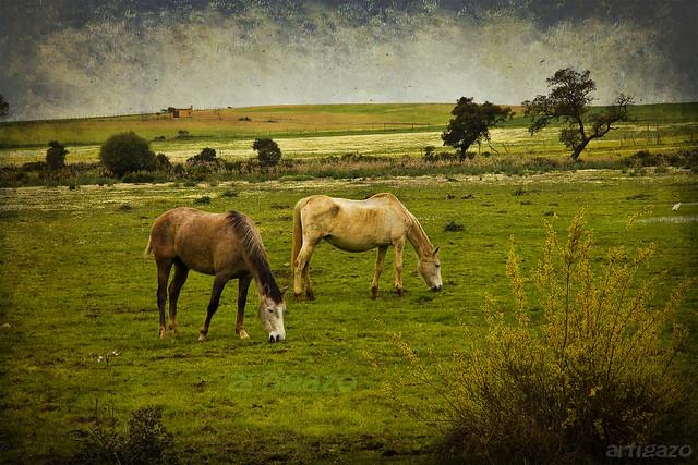 Texturized Sevillian pastureland (III)