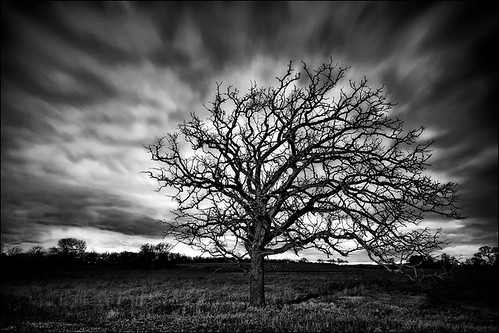 April Tree in Black and White. A wind and storm blows over a tree and prairie located in Rock County Wisconsin near Whitewater / Milton by Matt Anderson