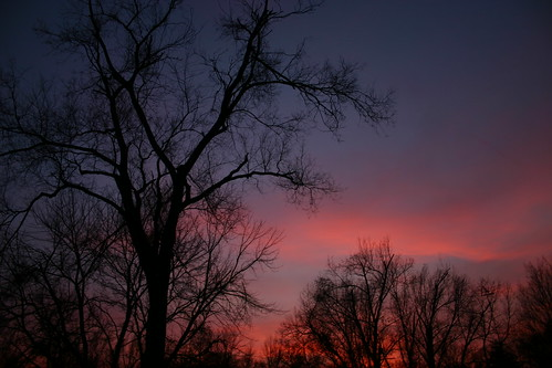 autumn sunset tree fall cram seann seanncram seannpatrick seannpatrickphotography