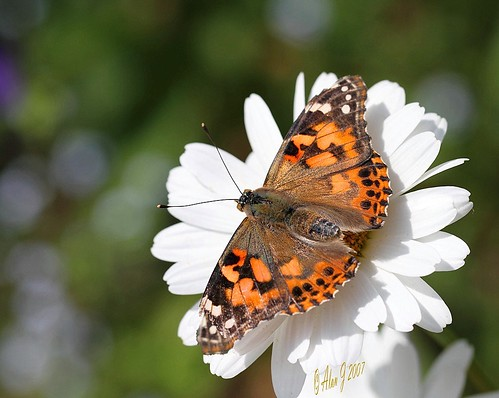 ny newyork canon butterfly bokeh adirondacks 7d upstatenewyork paulsmithscollege uppersaranaclake 100mmmacrof28lisusm