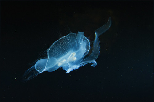 Flight Of the Jellyfish