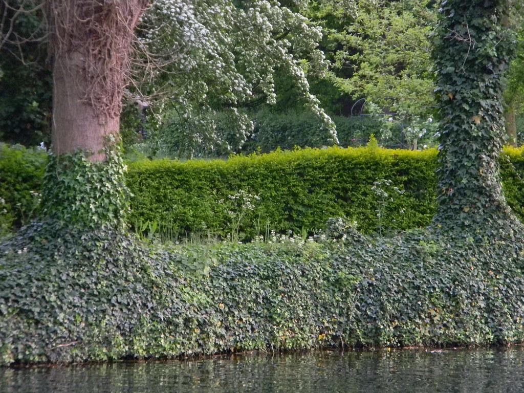 Ivy Huntingdon Circular