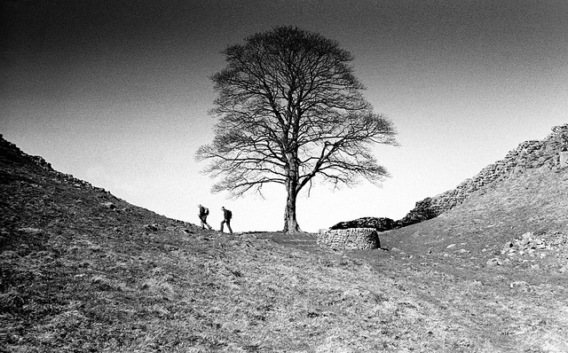 Walkers at Sycamore Gap, Hadrian's Wall, Northumberland