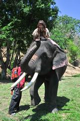 chimpanzee(0.0), zoo(0.0), common chimpanzee(0.0), ape(0.0), animal(1.0), indian elephant(1.0), elephant(1.0), elephants and mammoths(1.0), mahout(1.0),
