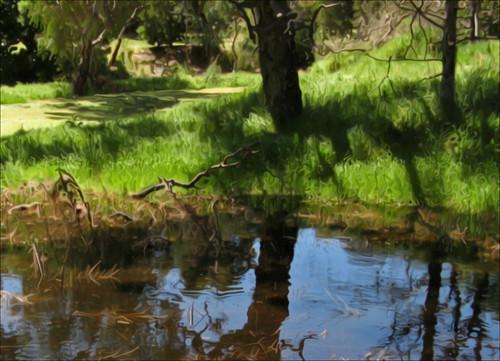 trees sunlight painterly grass kew reeds pond shadows australia victoria deadwood photoshopelements x7 glasscreek canona710 anisotropicdiffusefilter