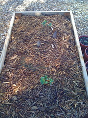 agriculture(0.0), garden(0.0), soil(0.0), produce(0.0), crop(0.0), leaf(1.0), herb(1.0), mulch(1.0),