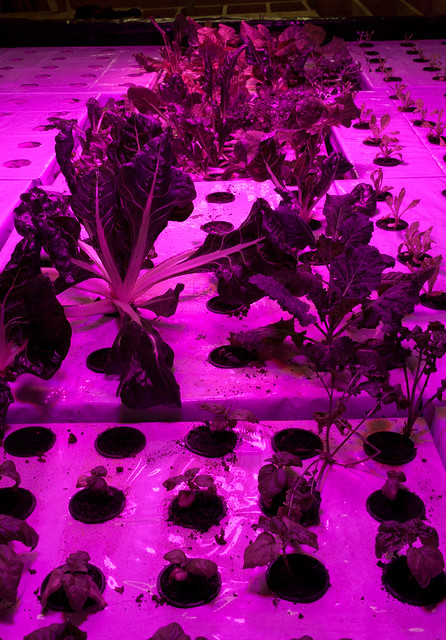 plants in the basement