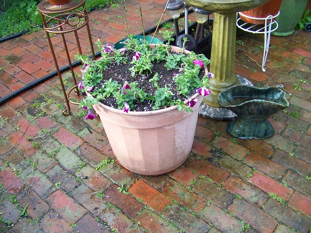 5642304632 30953c11ce - Wave petunias in containers ...