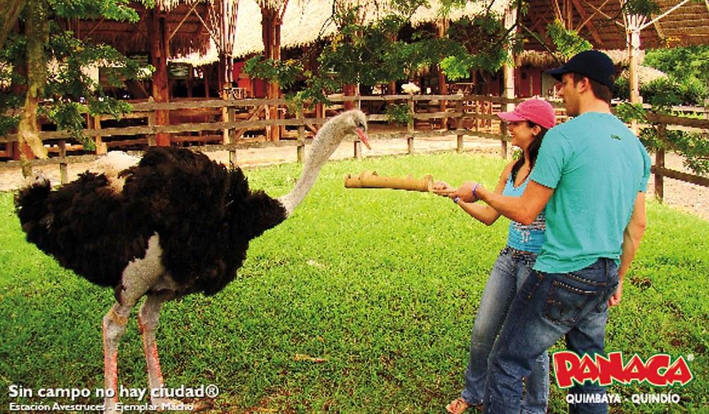 Imagen de Visitantes a PANACA alimentando una avestruz