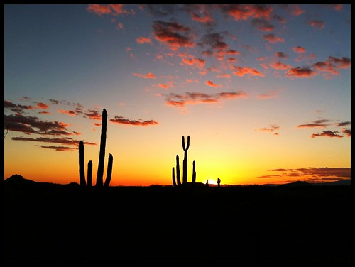 sunset arizona cactus sky southwest desert explore scottsdale saguaro iphone