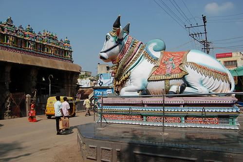 Der zum Shiva Tempel gehörende Nandi steht vor dem eigentlicht Tempel. Er mit leuchtenden Farben bemalt.