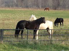 HorseyBFFsAgain