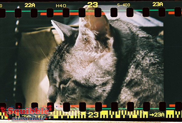 Cat Closeup - Diana F+
