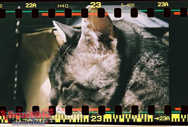 Cat Closeup - Diana F+